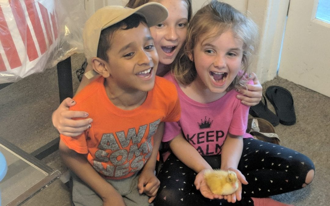 Inquiry in the Classroom: How hatching ducklings cultivated a rich learning opportunity for our students