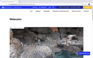Virtual Field Trips: Animal Adventures!